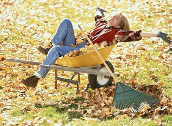 Что делать осенью в саду и огороде